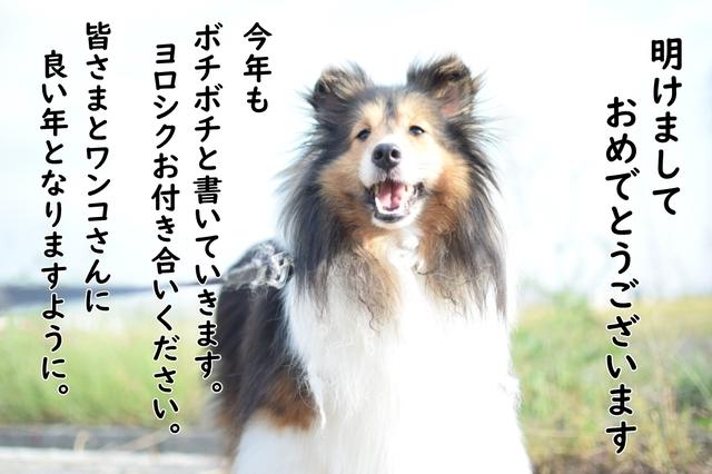 編集DSC_0208.JPG